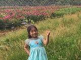 Esto es lo que se sabe de la niña Dulce María Alavez a un año de su desaparición
