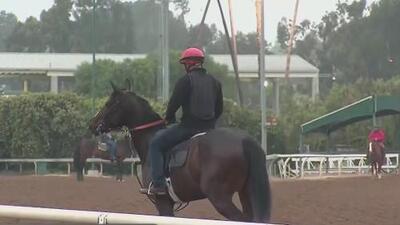 Gobernador de California pide nuevas medidas para evitar muertes de caballos durante y tras carreras
