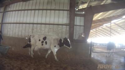 Investigación revela cómo abusan de los animales en la granja lechera que vende productos en Chicago