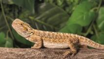 Serpientes, iguanas y lagartos no podrán una mascota en Florida