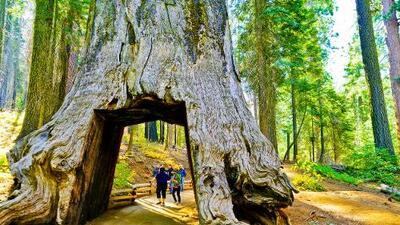 Parques Nacionales del país tendrán entrada gratuita este sábado