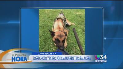 Sospechoso y perro policía mueren tras balacera en Long Beach
