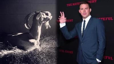 Heather, la cabra de la familia de Channing Tatum falleció