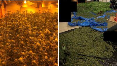 Incautan más de 700,000 dólares en droga en casa del área metropolitana de Atlanta