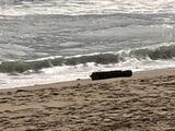 Hallan una bomba de la Segunda Guerra Mundial en una playa de Carolina del Norte