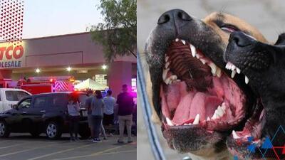 """""""Está muy raro este caso"""": Mujer desamparada muere tras ser atacada violentamente por perros"""