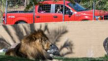 Una aventura diferente: el Zoológico de Phoenix permitirá que las personas visiten a los animales en sus carros