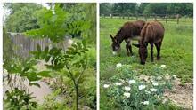 Esta reserva natural esconde un jardín, cascadas y áreas para picnic en familia