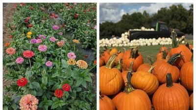 Finca en Marble Falls ofrece oportunidad de visitar campo de flores y elegir las que desees