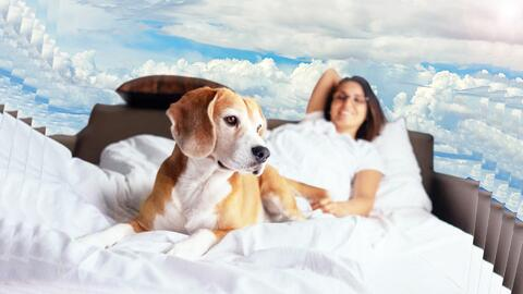 Las mujeres duermen mejor con su mascota que con su pareja, según estudio