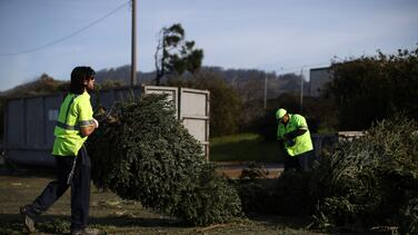 Esto es lo que debes hacer para desechar tu árbol de Navidad de la manera correcta