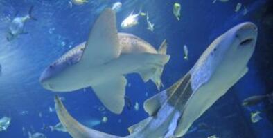 Una mujer embarazada se lanza al mar para salvar a su marido del ataque de un tiburón