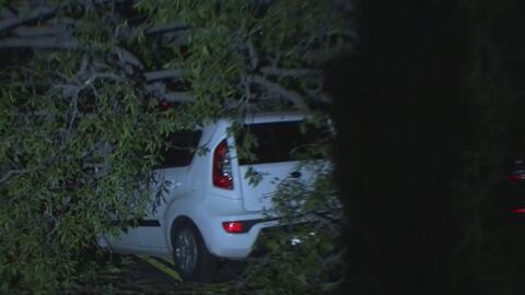Árboles caídos y otros incidentes por fuertes vientos en el sur de California