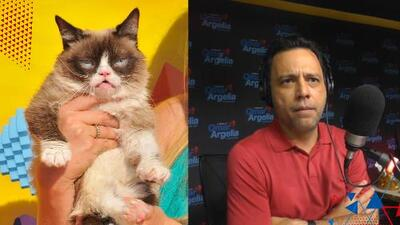Murió la gata 'Grumpy' y en el show le hicieron una canción de tributo