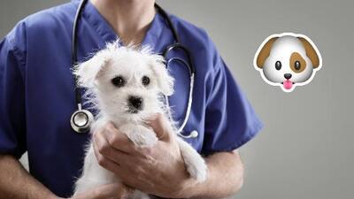 ¿Puede su perro contraer la gripe?