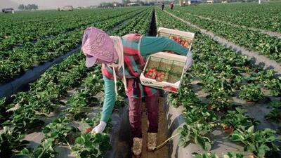 Nueva York por fin dará pago de horas extras y un día de descanso a trabajadores agrícolas