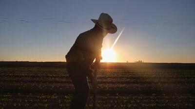 Investigan muerte de un campesino mientras trabajaba en un campo del sur del Valle Central