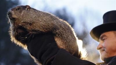 La marmota Phil predice que la primavera ya está en camino en EEUU