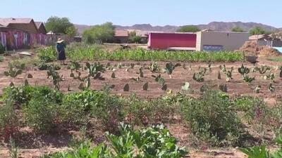Comunidad del sur de Phoenix transforma un terreno desértico en un oasis de alimentos