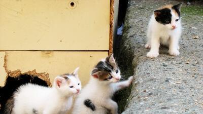 Las extraordinarias vidas de los gatos callejeros de Estambul