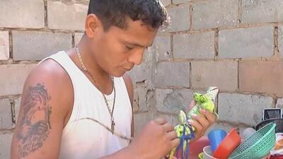 Las iguanas pasan a ser parte de la precaria dieta de los venezolanos ante la falta de alimentos