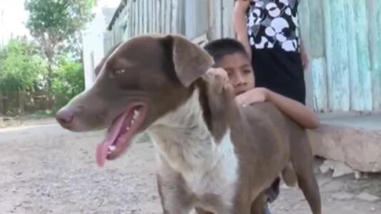 'Cuchufleto', fiel perro que espera volver a ver a su amo, uno de los mineros que murieron en México