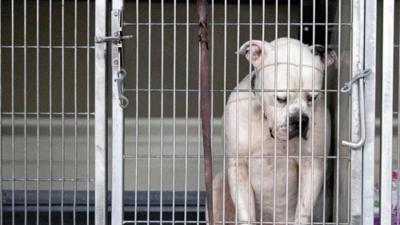 La desgarradora foto de un perro abandonado en un refugio de Indiana se vuelve viral