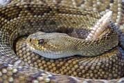 Lo que debes saber sobre las serpientes en Texas y cómo evitar mordeduras
