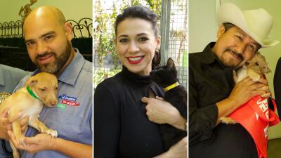 El Bueno, La Mala y El Feo están en busca de un hogar... pero para estas mascotas