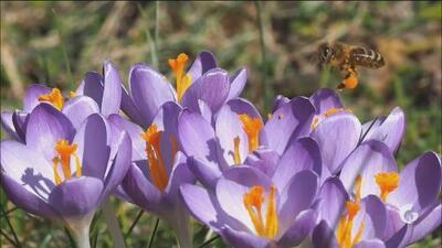 Más Curiosidades | Fenómenos naturales de la primavera