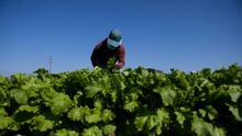 Los esfuerzos de autoridades en California para informar a trabajadores del campo sobre sus derechos laborales