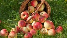 En estos ocho huertos cerca de Filadelfia puedes recoger la fruta de la temporada