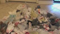 Ahogados en basura: ¿Qué puede hacer en casa para evitar dañar al medio ambiente?