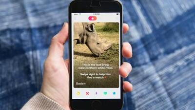 Sudan, el rinoceronte que tiene un perfil en 'Tinder'