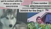 Mujer en Miami-Dade denunció el robo de su perra y los sospechosos la amenazaron con demandarla