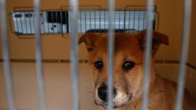 """""""No se servirá carne de perro en el recinto de los Juegos Olímpicos"""": la advertencia del comité organizador en Corea del Sur"""
