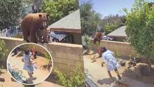 Video muestra el momento en que una mujer empuja a un oso para proteger a sus perros