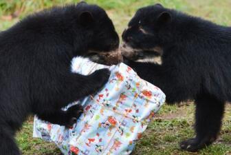 Las fotos navideñas que no te puedes perder