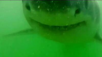 Investigador en playa de Massachuset capta a tiburón que le muerde su cámara