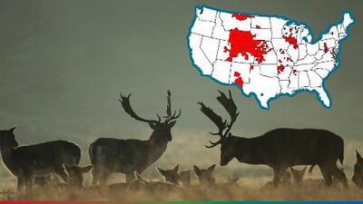 'Venados Zombies' aterrorizan 24 estados en EEUU