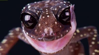 Un caimán albino, una rana azul y la serpiente de dos cabezas: impresionantes fotografías de anfibios y reptiles