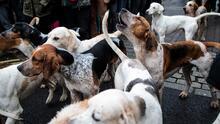 Ofrecen servicios de preparación de mascotas para la temporada de huracanes