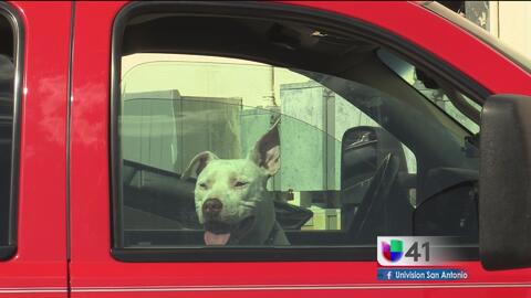 Encuentran a perro encerrado en un vehículo a altas temperaturas