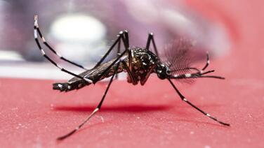 Emiten alerta ante quinto caso de dengue en Miami-Dade