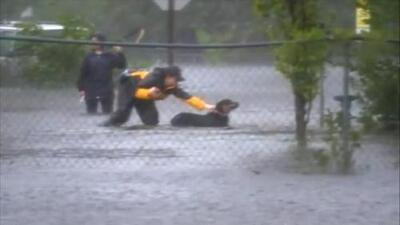 Reportera interrumpe una transmisión para salvar a una perra de la inundación en New Bern