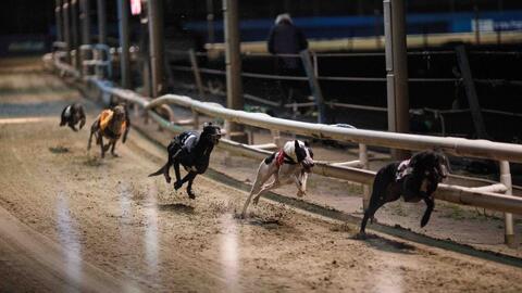 Perros para carreras sufren abusos de esteroides