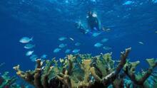 En el arrecife de coral más grande de EEUU se habla español