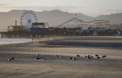 Otra de las populares playas cerradas en Los Ángeles es la de la cuidad de Santa Monica, un destino turístico que ahora solo disfrutan las gaviotas.