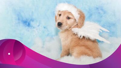 Los perros son nuestros ángeles de cuatro patas