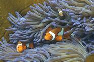 """A photo taken on September 22, 2014, shows fish swimming through the coral on Australia's Great Barrier Reef. The 2,300-kilometre-long reef contributes AUS$5.4 billion (US$4.8 billion) annually to the Australian economy through tourism, fishing, and scientific research, while supporting 67,000 jobs, according to government data. According to an Australian government report in August, the outlook for the Earth's largest living structure is """"poor"""", with climate change posing the most serious threat to the extensive coral reef ecosystem. AFP PHOTO/William WEST (Photo credit should read WILLIAM WEST/AFP via Getty Images)"""